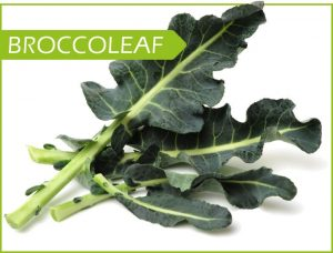 broccoleaf