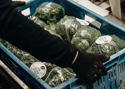 Verdonk broccoli gesealed