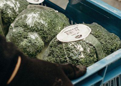 Verdonk Broccoli